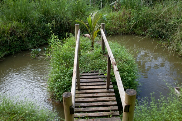 bridge at the tilapia pond