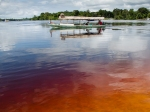 The water of the Rio Negro (The Black River) is clear but starts as a yellowish color when shallow and then builds up its density to a rich black like a cup of tea or coffee.