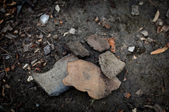 """Shards of pottery we found along a stretch of """"black earth"""" on the Rio Negro."""