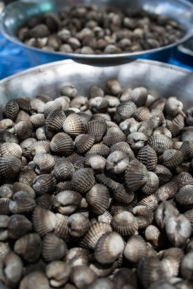 A bowl of fresh-caught cockles.